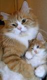 Mamma & Mini-Me