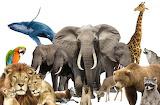 "Animals ""National Wildlife Day"" ""by uranimated"""