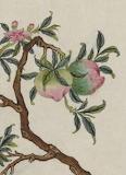 Fruits roses MS 387