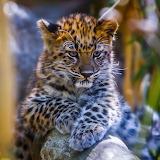 ☺♥ Leopard cub...
