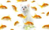 Cute-Kitten-kittens-16096168-1280-800
