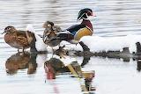Assortment of birds after fresh snow Montana
