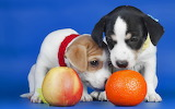 ☺ Cute puppies...