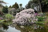Springtome at Cherry Tree Manor, Waikato New Zealand