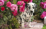 Cucciolo tra i fiori