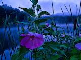 Flower Marks Fishing Spot