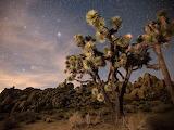 Joshua Tree Park Under Stary Sky Mojave Desert California USA