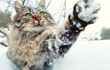 A cat playing with snow