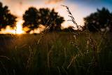 Tall Grass in Erwin Park