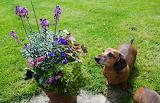 She loves plants