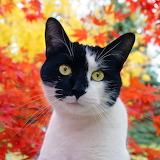 Autumn Kitty...