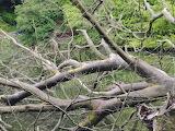 Chellow Dene tree