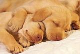 #Sleeping Puppies