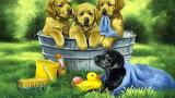 Bathing puppies