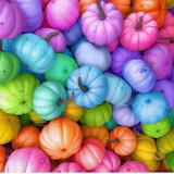 Pumpkins for your pet Unicorn
