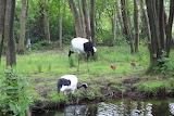Crane family foraging