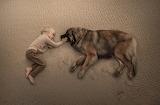 Fotografia niño y perro