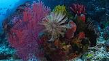 Bommie Reef