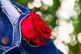 jacket & rose