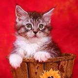 ☺♥ Cute kitty...
