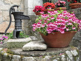 Flowers by the pump