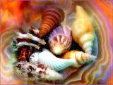 SeashellsAbstract