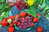 Strawberries, raspberries, currants, berries, fruit, leaves