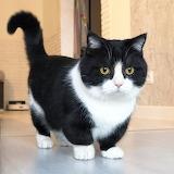 Instagram Cat with 4 inch legs