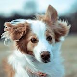 Funny Puppy...