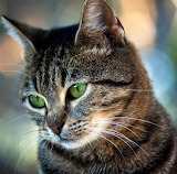 Sweet Kitty...