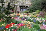 Daffodils, tulips, flowers, spring, garden