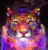 Tiger Fun