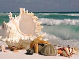 caracoles de mar 6