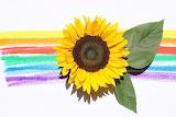 Sunflower @ pexels.com...