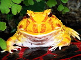 #Colorful Frog