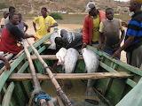 fisherman in Angola