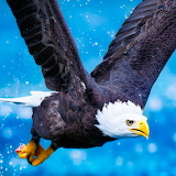 Eagle in Flight...