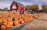Red barn, Idaho, pumpkins, harvest, fall, people, production sal
