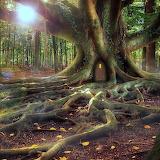 Majic tree
