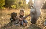 Boy, horse and dog