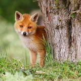 ❤️Little Fox...