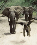 Dumbo and Family