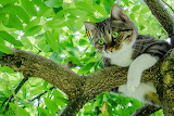 Cat resting on a tree branch