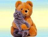 Bear Hug...