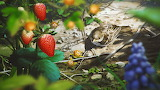Bird Strawberry