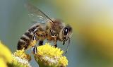 Queen Bee's Puzzle