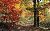 Jesień w Kampinosie - foto- K.S.-Altro