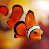 ☺I am Not Nemo!!! :(