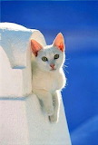 Purrfectly White
