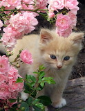 Kitten-in-the-flowers-babies-pets-and-animals-16731211-400-522
